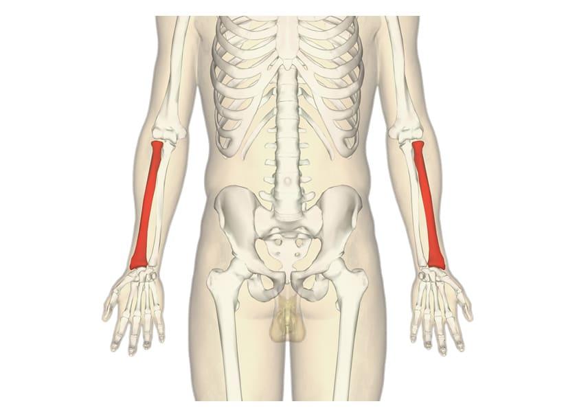橈骨(とうこつ)遠位端骨折