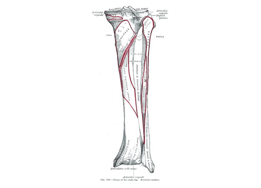 脛骨遠位端骨折・腓骨遠位端骨折